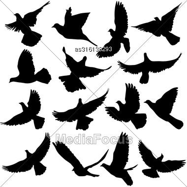 Concept Of Love Or Peace. Set Of Silhouettes Of Doves. Vector Illustration Stock Photo