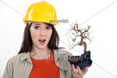 Construction Worker Holding A Dead Bonsai Stock Photo