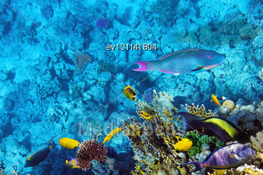 Coral And Fish In The Red Sea.Egypt Stock Photo