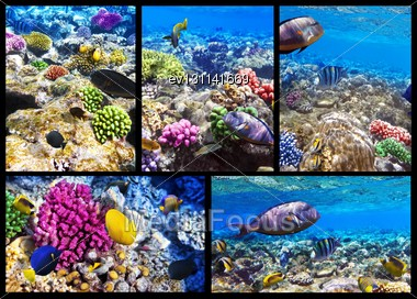 Coral And Fish In The Red Sea. Egypt, Africa. Collage Stock Photo
