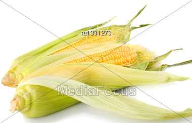 Corn Cobs Isolated On White Background Stock Photo