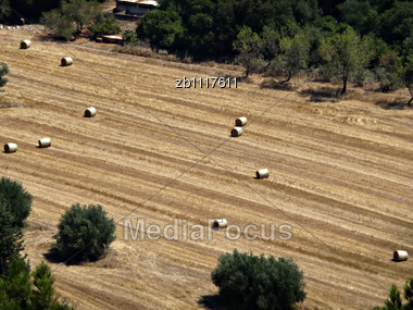 Corn Field With Bales At Summer Sunny Day Stock Photo