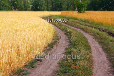 Country Road In Wheat Field Stock Photo