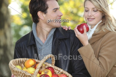 Couple Gathering Apples Stock Photo