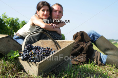 Couple Hand Picking Grapes Stock Photo