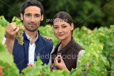 Couple Of Wine-growers In Vineyards Stock Photo