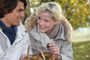 Couple Picking Chestnuts Stock Photo