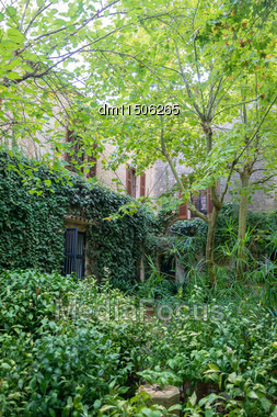 Courtyard With Trees And Dense Foliage Stock Photo