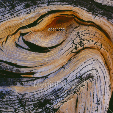 Creases In Wood, Tree Trunk Stock Photo