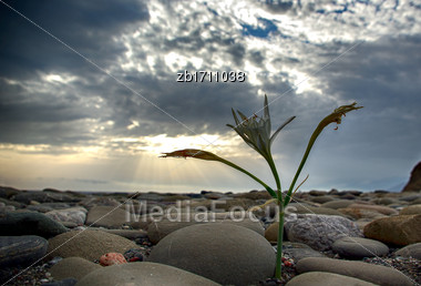 Creatn Lily At Beach Against Cloudy Sky And Sun Ray Stock Photo