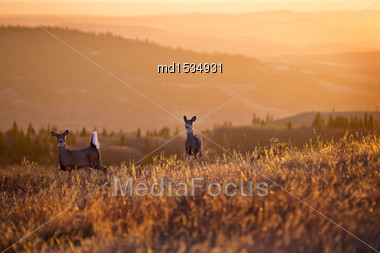 Cypress Hills Sunset Elkwater Alberta Horeshoe Canyon Stock Photo