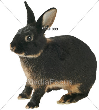 What Breed And Color Of Rabbit Is This Help Yahoo Answers