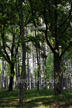 Dark Forest With Little Sunlight That Is Coming Through Branches And Leaves. Stock Photo