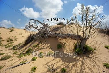 Dead Tree Among The Sand In The Desert Stock Photo