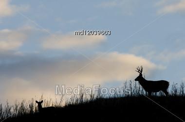 Deer Silhouette Saskatchewan Canada Mule Deer Hills Stock Photo