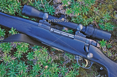 Detail Of Hunting Rifle Sitting On Alpine Plants In The Southern Alps, New Zealand Stock Photo