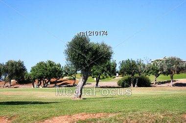 Different Trees In Cyprus Village. Stock Photo