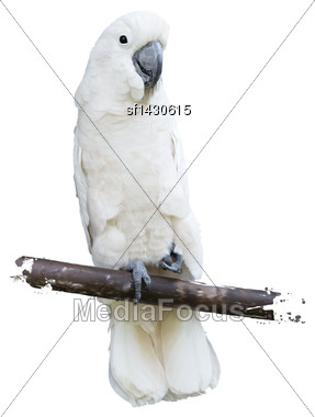 Digital Painting Of White Parrot Stock Photo