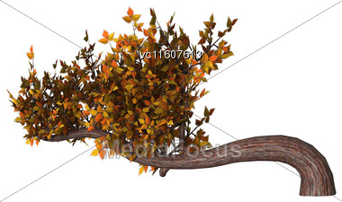 Digital Render Of An Autumn Bonsai Tree Isolated On White Background, Han-kengai Style Stock Photo