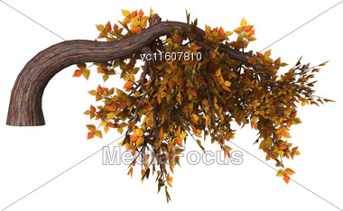 Digital Render Of An Autumn Bonsai Tree Isolated On White Background, Kengai Style Stock Photo