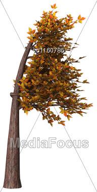 Digital Render Of An Autumnal Bonsai Tree Isolated On White Background,Fukinagashi Style Stock Photo