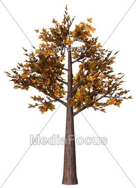 Digital Render Of An Autumnal Bonsai Tree Isolated On White Background, Hokidachi Style Stock Photo