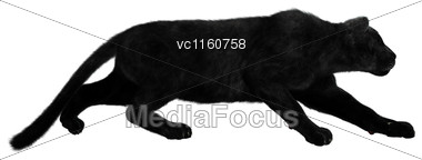 Digital Render Of A Big Black Panther Hunting Isolated On White Background Stock Photo