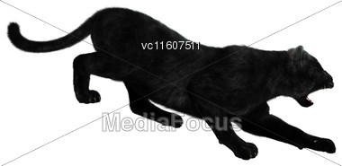 Digital Render Of A Big Cat Black Panther Hunting Isolated On White Background Stock Photo