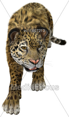 Digital Render Of A Big Cat Jaguar Hunting Isolated On White Background Stock Photo