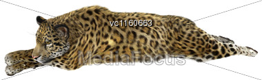 Digital Render Of A Big Cat Jaguar Resting Isolated On White Background Stock Photo
