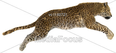 Digital Render Of A Big Cat Leopard Jumping Isolated On White Background Stock Photo