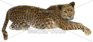 Digital Render Of A Big Cat Leopard Laying Isolated On White Background Stock Photo
