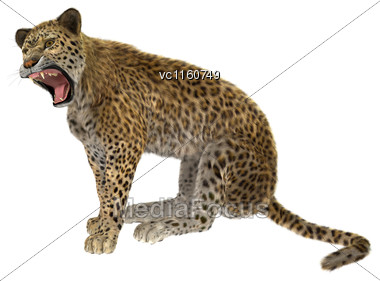 Digital Render Of A Big Cat Leopard Sitting Isolated On White Background Stock Photo