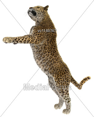Digital Render Of A Big Cat Leopard Standing Isolated On White Background Stock Photo