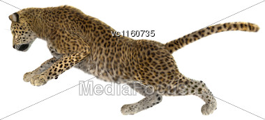 Digital Render Of A Big Cat Leopard Isolated On White Background Stock Photo