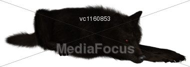 Digital Render Of A Black Wolf Isolated On White Background Stock Photo