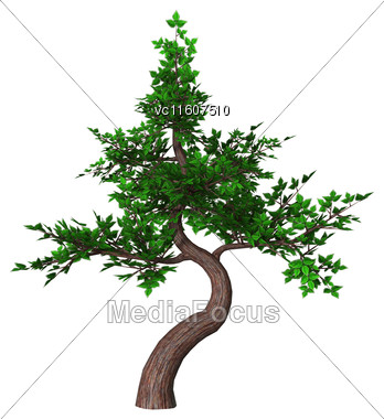 Digital Render Of A Green Bonsai Tree Isolated On White Background, Moyogi Or Informal Upright Style Stock Photo