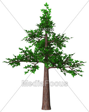 Digital Render Of A Green Bonsai Tree Isolated On White Background Stock Photo