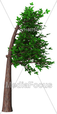 Digital Render Of A Green Bonsai Tree Isolated On White Background, Fukinagashi Or Windblown Style Stock Photo