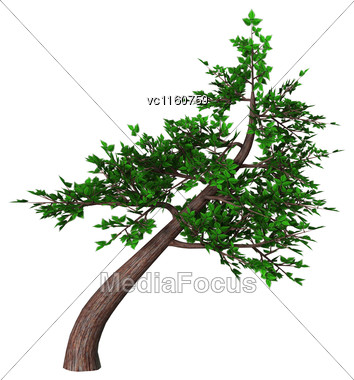 Digital Render Of A Green Bonsai Tree Isolated On White Background, Slanting Style Or Shakan Stock Photo