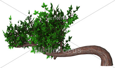 Digital Render Of A Green Bonsai Tree Isolated On White Background, Han-kengai Style Stock Photo