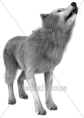 Digital Render Of A Polar Wolf Howling Isolated On White Background Stock Photo