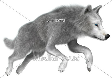 Digital Render Of A Polar Wolf Jumping Isolated On White Background Stock Photo