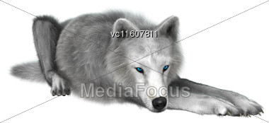 Digital Render Of A Polar Wolf Resting Isolated On White Background Stock Photo