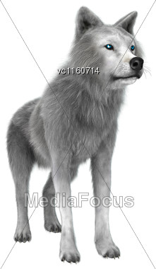 Digital Render Of A Polar Wolf Isolated On White Background Stock Photo
