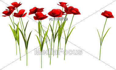 Digital Render Of Red Poppy Flowers Isolated On White Background Stock Photo
