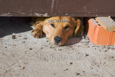 Dog Sleeping On Construction Area At Midday Stock Photo