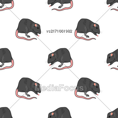 Domestic Rats Isolated On White Background. Rodent Seamless Pattern Stock Photo