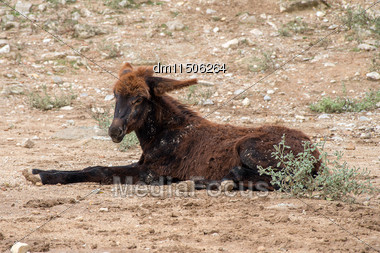 Donkey Resting On The Farm Stock Photo