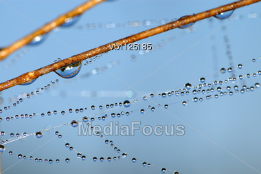 Drops Of Dew On Blades Of Grass Early In The Morning Stock Photo